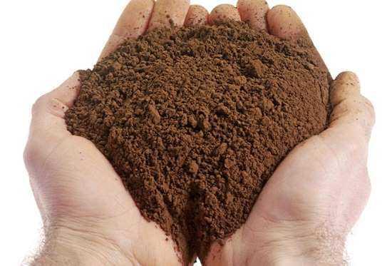 Keçiboynuzu nasıl kullanılmalı?Keçiboynuzunu hem taze olarak hem de toz halinde alarak çayını yapıp tüketebilirsiniz.