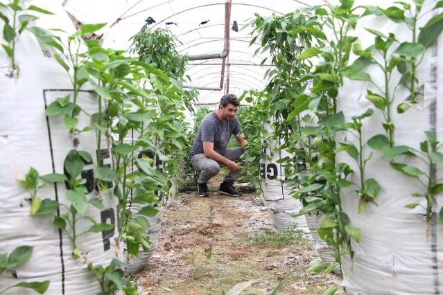 Antalya'nın Aksu ilçesinde yaşayan elektronik mühendisi bir çiftçi, serasına kurduğu çuvallar üzerinde biber yetiştirmeye başladı.