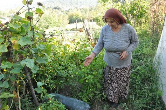 """""""Salatalıkları yemekten korktum""""  İzmir'de bir işletmede çalışan Çinlilerin komşusuna bu tohumları verdiğini, kendisinin de merak edip tohumları bahçesine ektiğini söyleyen Acıbal, salaktalıkları yemekten korktuğunu söyledi:"""