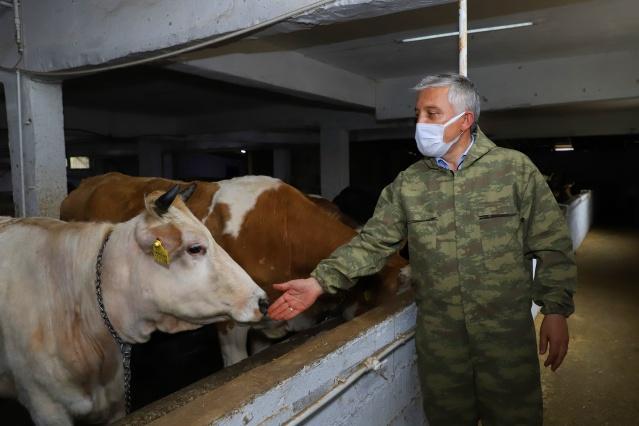 Ordu Büyükşehir Belediyesi ve Mesudiye Belediyesi iş birliğinde Mesudiye ilçesinde kurulan 'Büyükbaş Hayvan Bakım Oteli ve İnek Kiralama Merkezi', hayvan sahiplerine büyük kolaylık sağlıyor.
