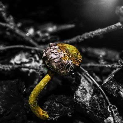 ÖLÜMSÜZ GİBİ:  Parlak sarı renkte olan bu esrarengiz canlı saatte 4 santimetre uzayabiliyor. Doğadaki bir çok canlı erkek ve dişisiyle var.