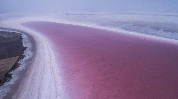 TÜRKİYE'nin ikinci büyük gölü olan Tuz Gölü, suyun içinde yaşayan algler ve bakteriler nedeniyle pembe renge büründü. Dunaliella salma isimli alg ile halo bakteriler nedeniyle pembeye bürünen göl yerli ve yabancı turistlerin ilgi odağı oldu.