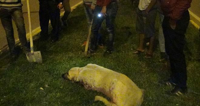 Gaziantep'te köpekleri silahla acımasızca öldürdüler