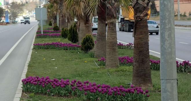 Büyükşehir Belediyesi 2 milyon çiçeği toprakla buluşturdu