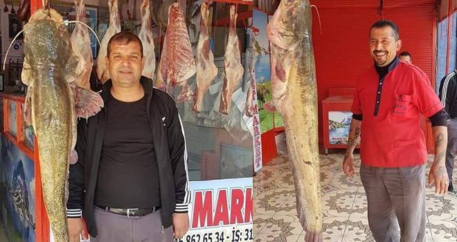 Kahramanmaraş'ta 45 kilo yayın balığı yakalandı
