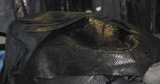 Polisler gözlerine inanamadı! Havalimanında anakonda derisi yakalandı