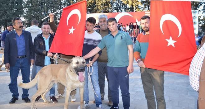 Hollanda'ya bir tepkide Türkoğlu'ndan