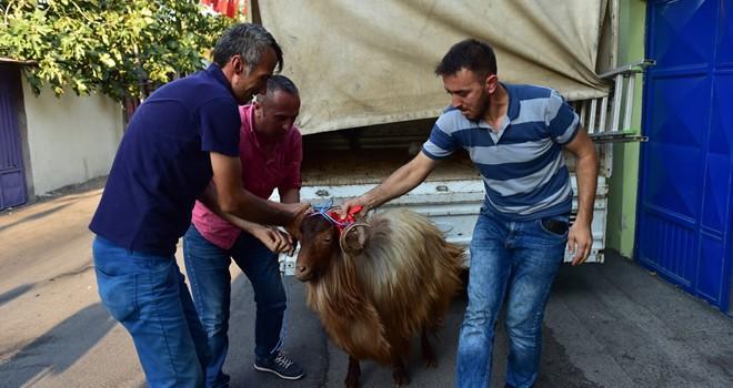 Dulkadiroğlu Belediyesi'nden şehit ailelerine kurban