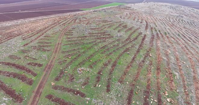 Kahramanmaraş'ta 18 bin badem fidanı toprakla buluştu