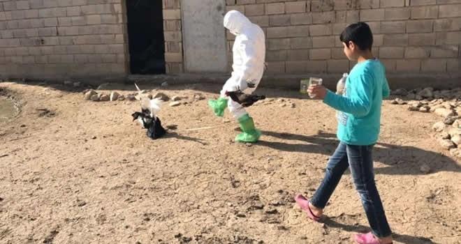 Mardin'de kuş gribine rastlandı