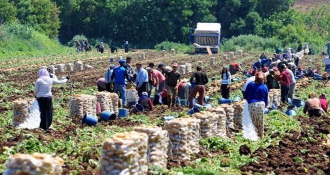 Elbistan'da tarım işçilerinin günlük yevmiyesi 50 TL olarak belirlendi