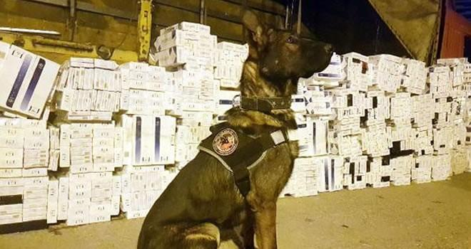 Gaziantep'te binlerce kaçak sigara ele geçirildi
