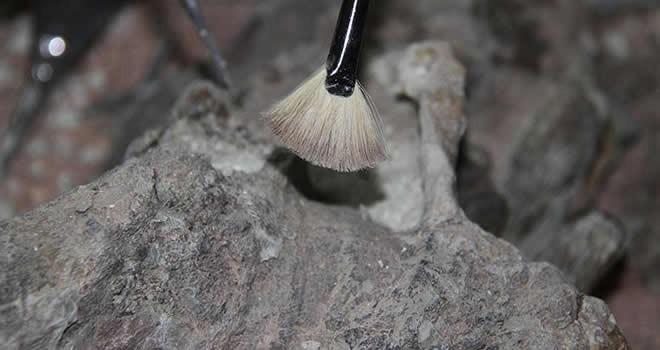 120 milyon yıl öncesine ait kalıntılar bulundu