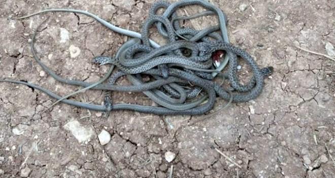 Kış sıcak geçti o ilimizi yılanlar bastı!