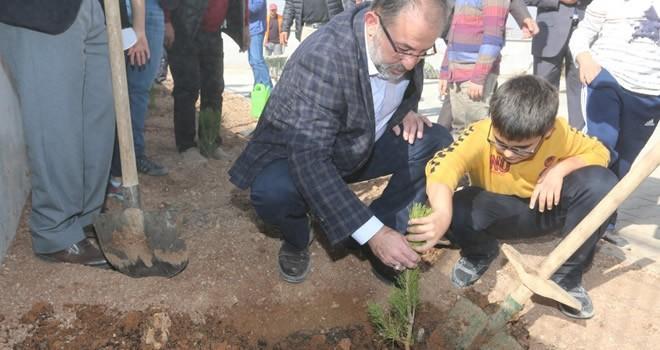 Afşin'de 200 çam fidanı toprakla buluştu