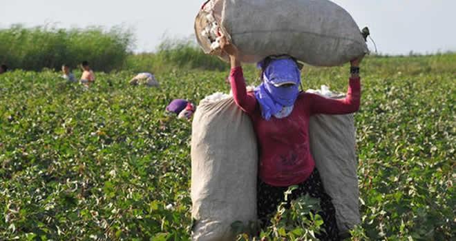 Beklenen artış oldu! Tarım işçisinin günlük ücreti arttı