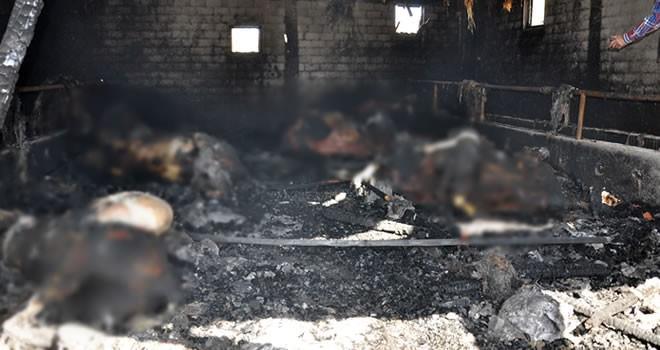 Kahramanmaraş'ta yangın: 9 büyükbaş hayvan telef oldu