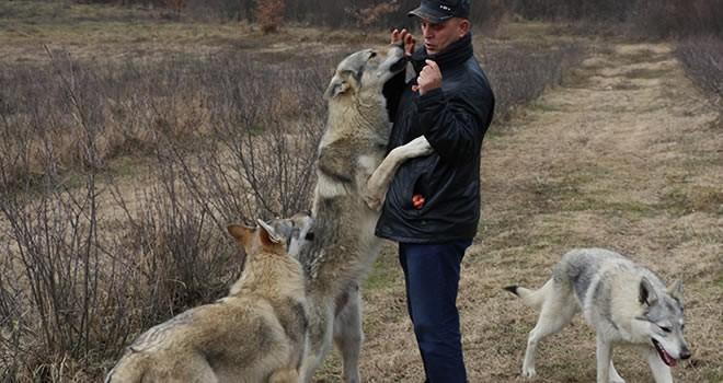 Evcilleştirdiği kurtları aileden bir parça olarak görüyorlar