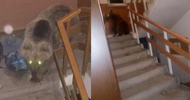 Korkunç olay! Aç kalan ayılar binaya daldı