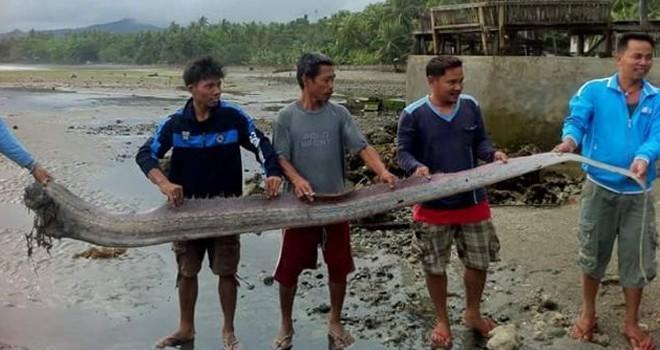 Depremin habercisi dev kürek balığı kıyıya vurdu