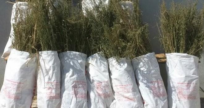 Kahramanmaraş'ta zehir tacirlerine '65 kiloluk' darbe