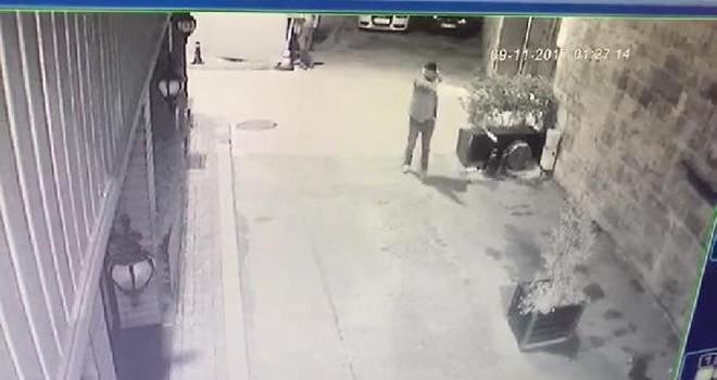 Vicdansız adam sokak kedilerine kurşun yağdırdı