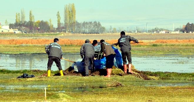 Kahramanmaraş'ta 4 güme imha edildi