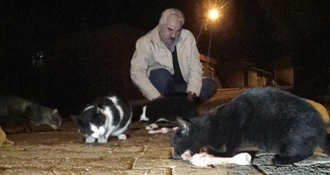 Kahramanmaraş'ta sokak kedilerine gözü gibi bakıyor