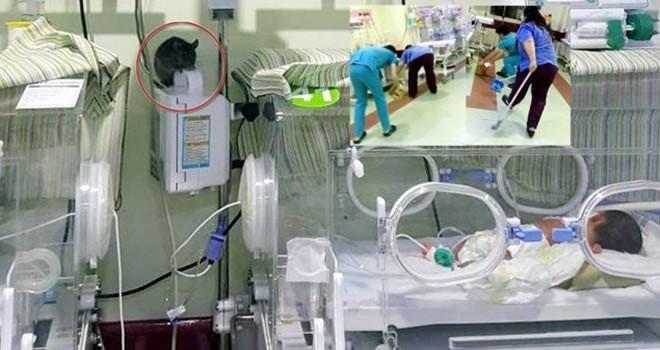 Şanlıurfa'da skandal görüntü: Hastanenin yeni doğan servisine fare girdi!