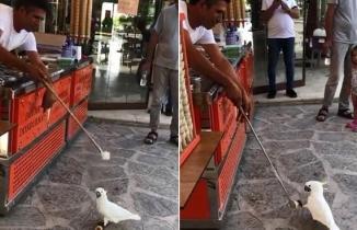 Papağana yapılan dondurma şakası izleyenlere keyifli anlar yaşattı