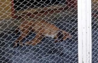 Kahramanmaraş'ta hayvan barınağında skandal!