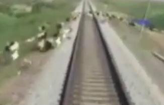 Tren, raylara çıkan koyun sürüsünü telef etti