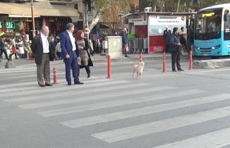 Kahramanmaraş'ta köpekten insanlık dersi