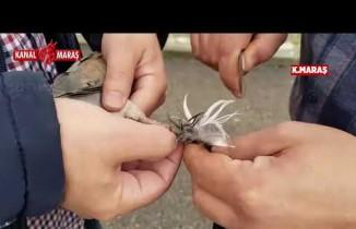 Kahramanmaraş'ta ağaçta mahsur kalan kumruyu kurtarıp korumaya aldı