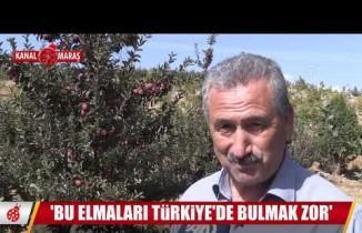 Kahramanmaraş'ta bin 350 metre rakımda yetişiyor... Bu elmaları Türkiye'de bulmak zor!