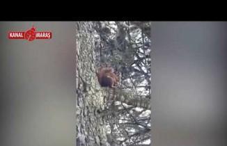 Kahramanmaraş'ta sincap ve geyik böyle görüntülendi!