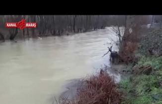 Kahramanmaraş'ta tarım arazilerini sel vurdu!