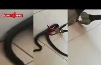 Kahramanmaraş'ta yılan paniği!