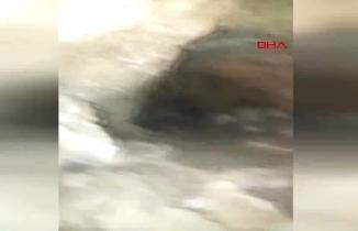 Malatya'da mağarada görüntülenince çığlık çığlığa kaçtı