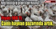 Hayvan pazarında kaz yetiştiriciliği