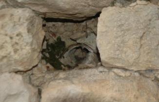 Kahramanmaraş'ta keçileri otlatırken buldu: Burada tarih yatıyor!