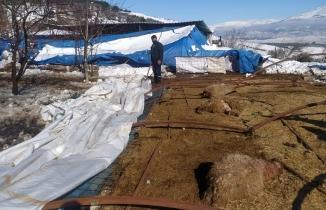 Kahramanmaraş'ta kar yağışı onlarca küçükbaş hayvanları telef etti